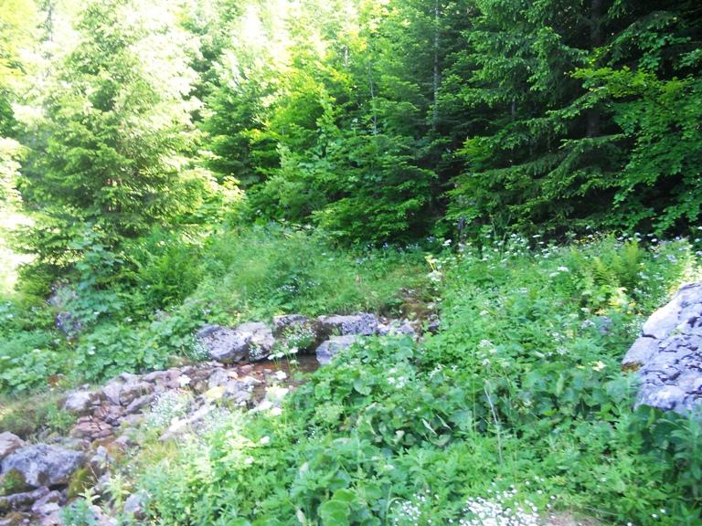 Zabojsko jezero - izvor