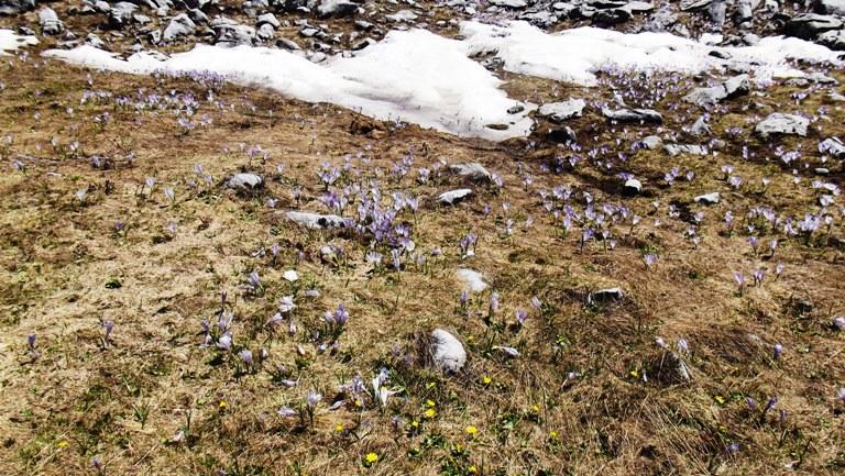 Kaćuni pobijedili snijeg