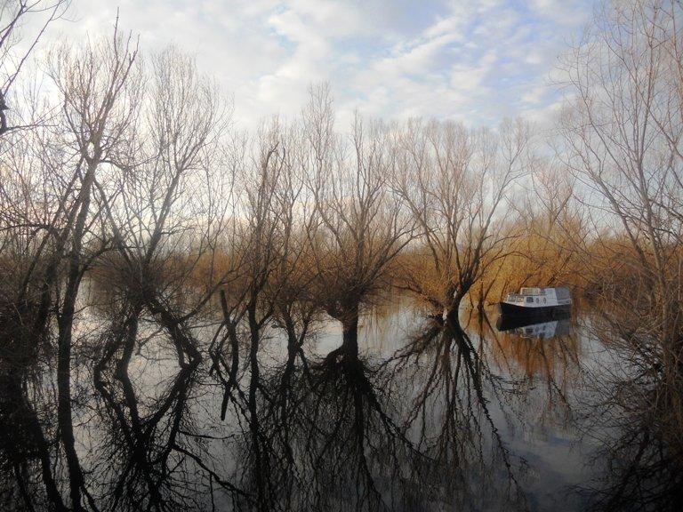 Skadarsko jezero, Plavnica