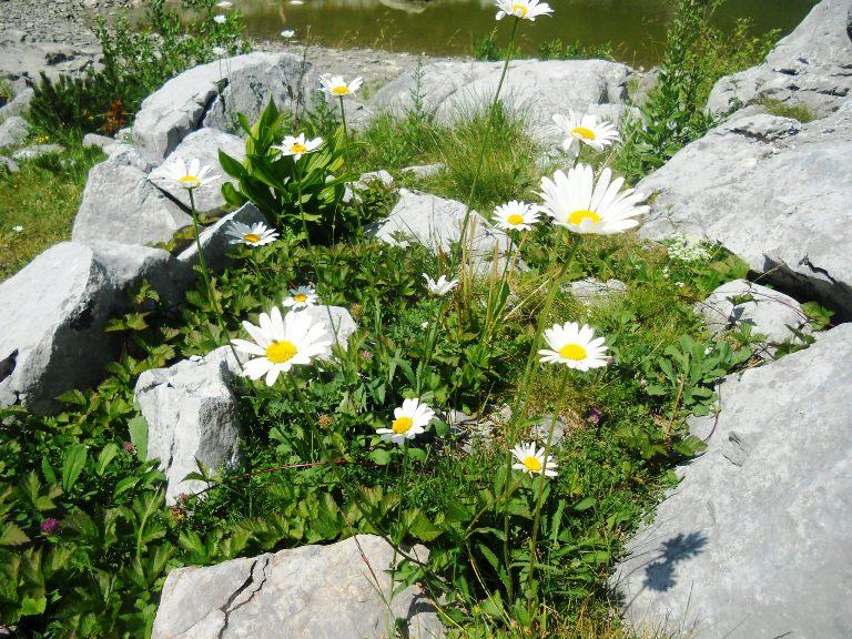 Cvijeće pored Jablan jezera