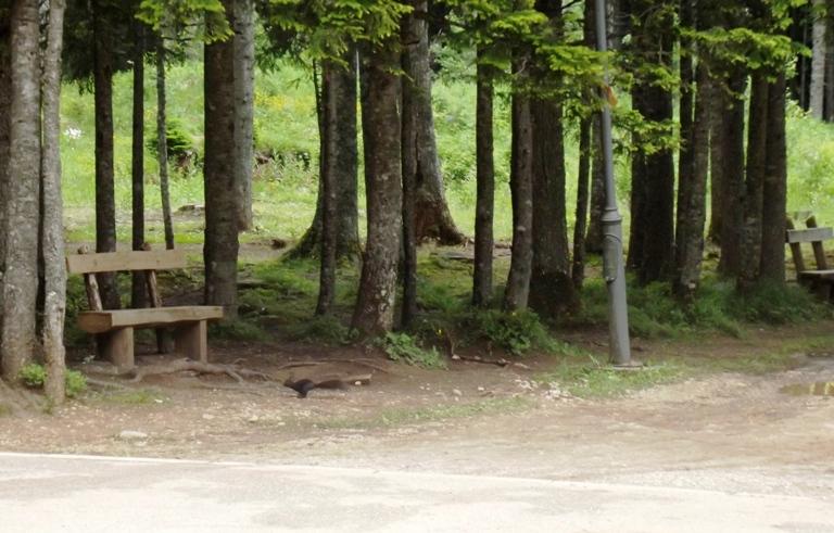 Vjeverica pored Crnog jezera