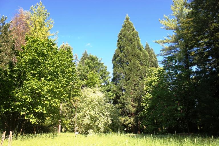Arboretum, Grahovo
