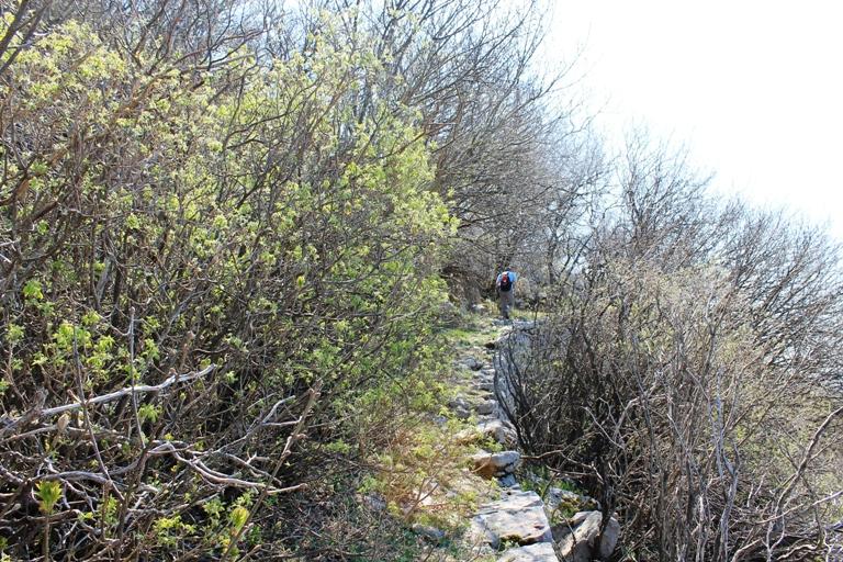 Put ka tvrđavi Šanik