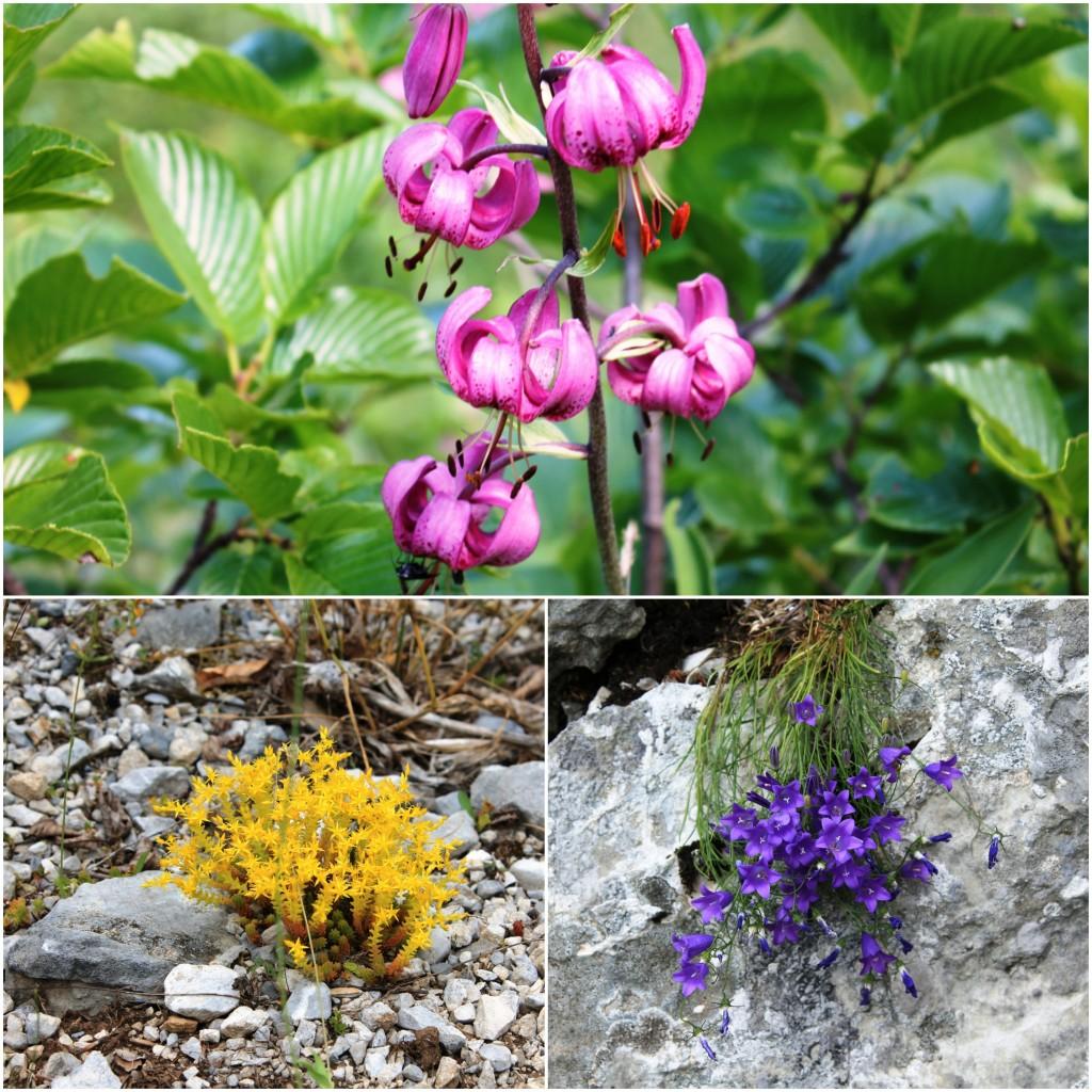 Cvijeće Prokletija