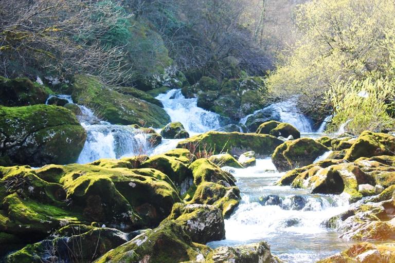 Crnojevića rijeka