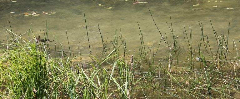 Veliko Stabansko jezero