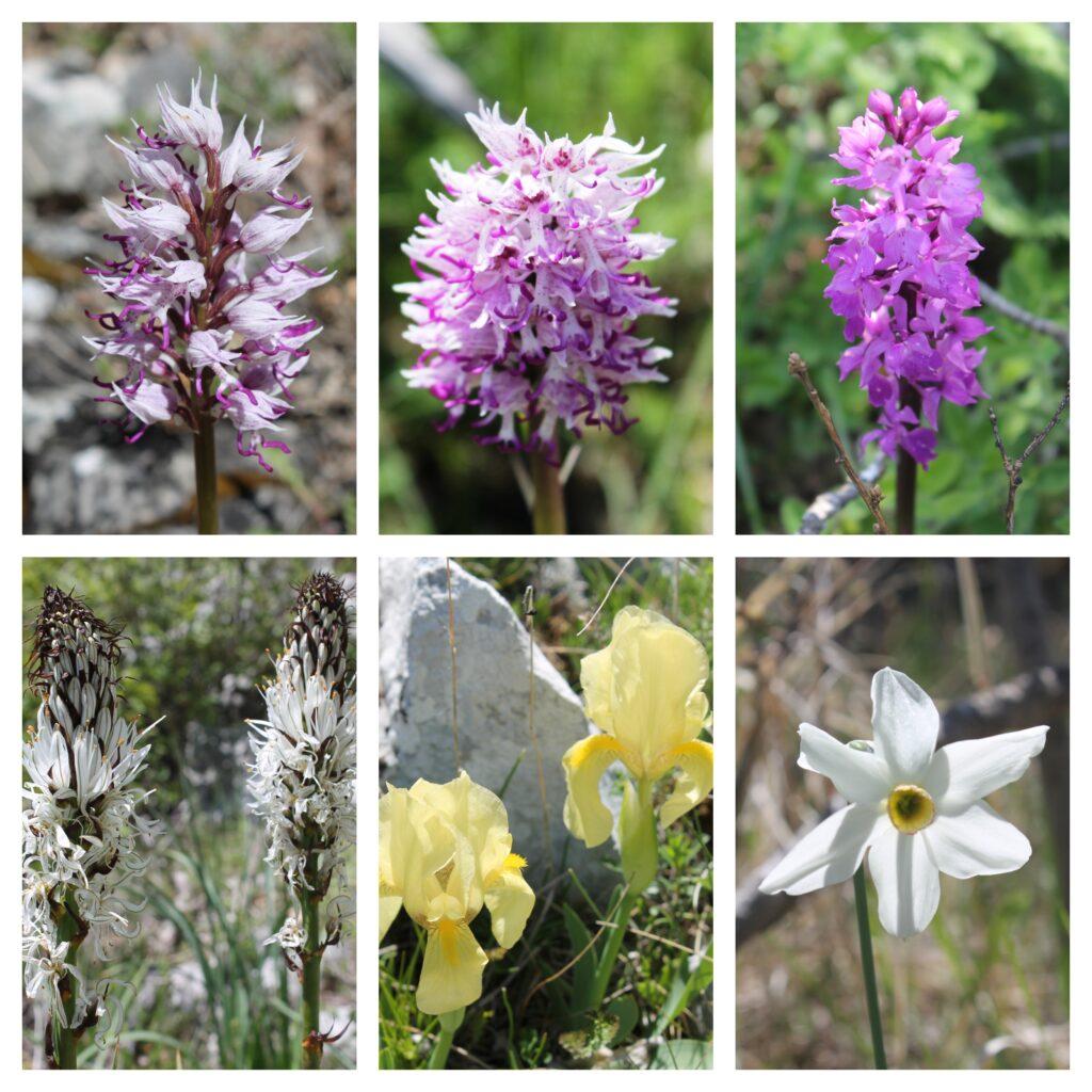 Cvijeće sa Suke Grude