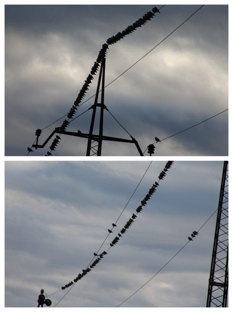 Ptice na žici