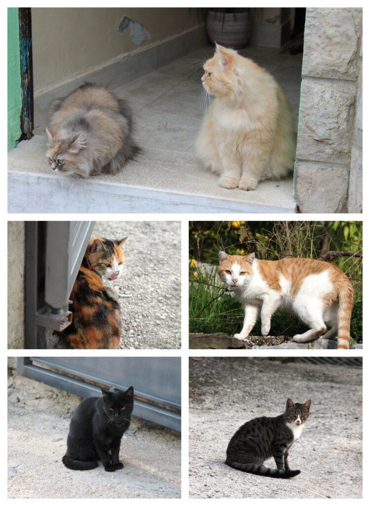 Starobarske mačke